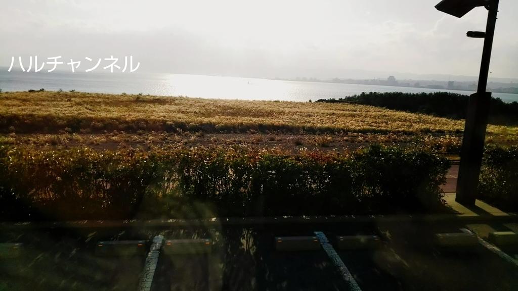 長渕剛が桜島でライブを行った場所