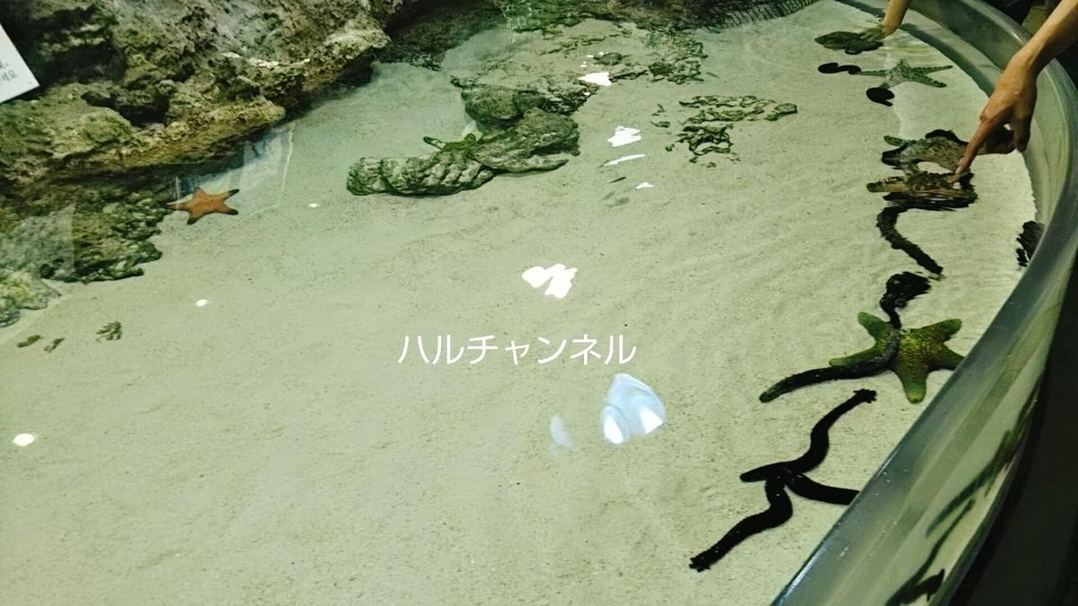 【沖縄】美ら海水族館「ヒトデ・ナマコ触れるコーナー」