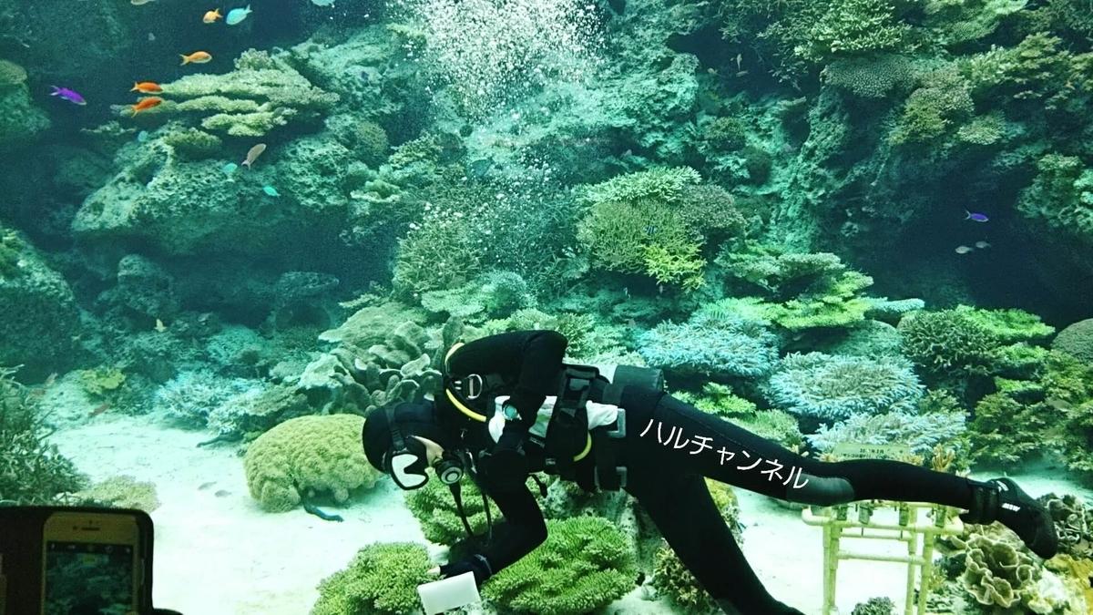 【沖縄】美ら海水族館「館内:水槽の中お掃除中」