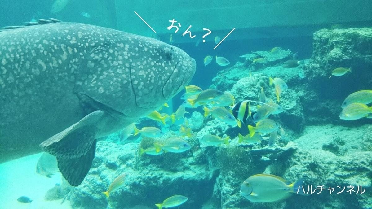 【沖縄】美ら海水族館「館内:水槽の中」