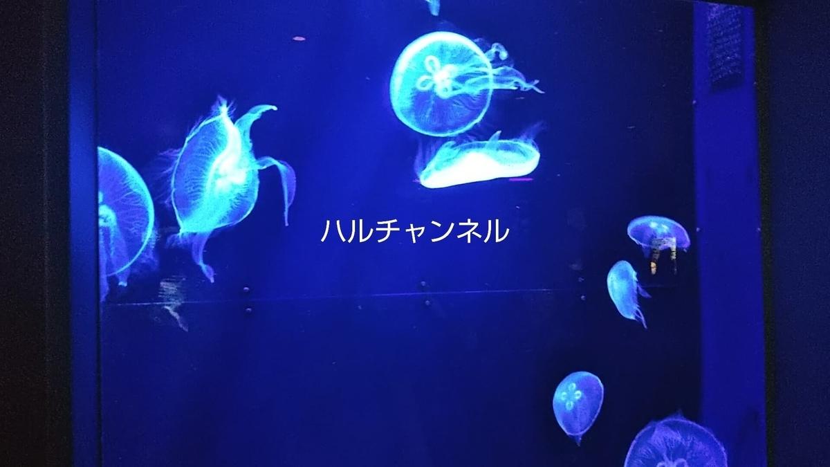 【沖縄】美ら海水族館「館内:水槽の中クラゲ」