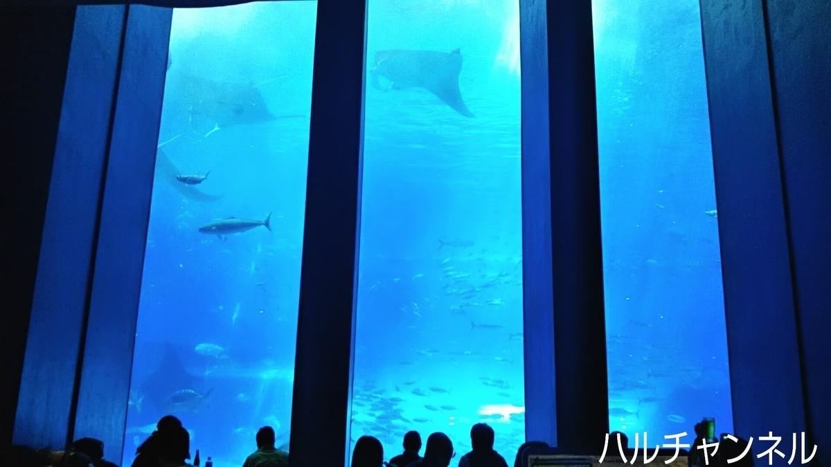 【沖縄】美ら海水族館「館内:レストランからの風景」