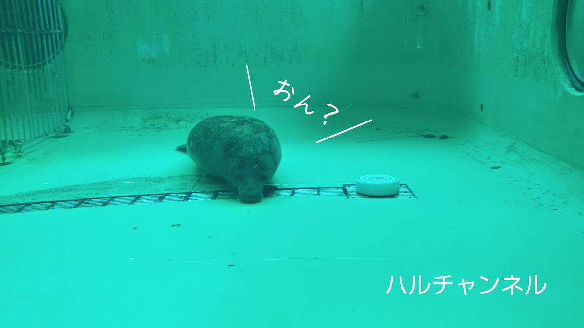【沖縄】美ら海水族館「マナティー館」