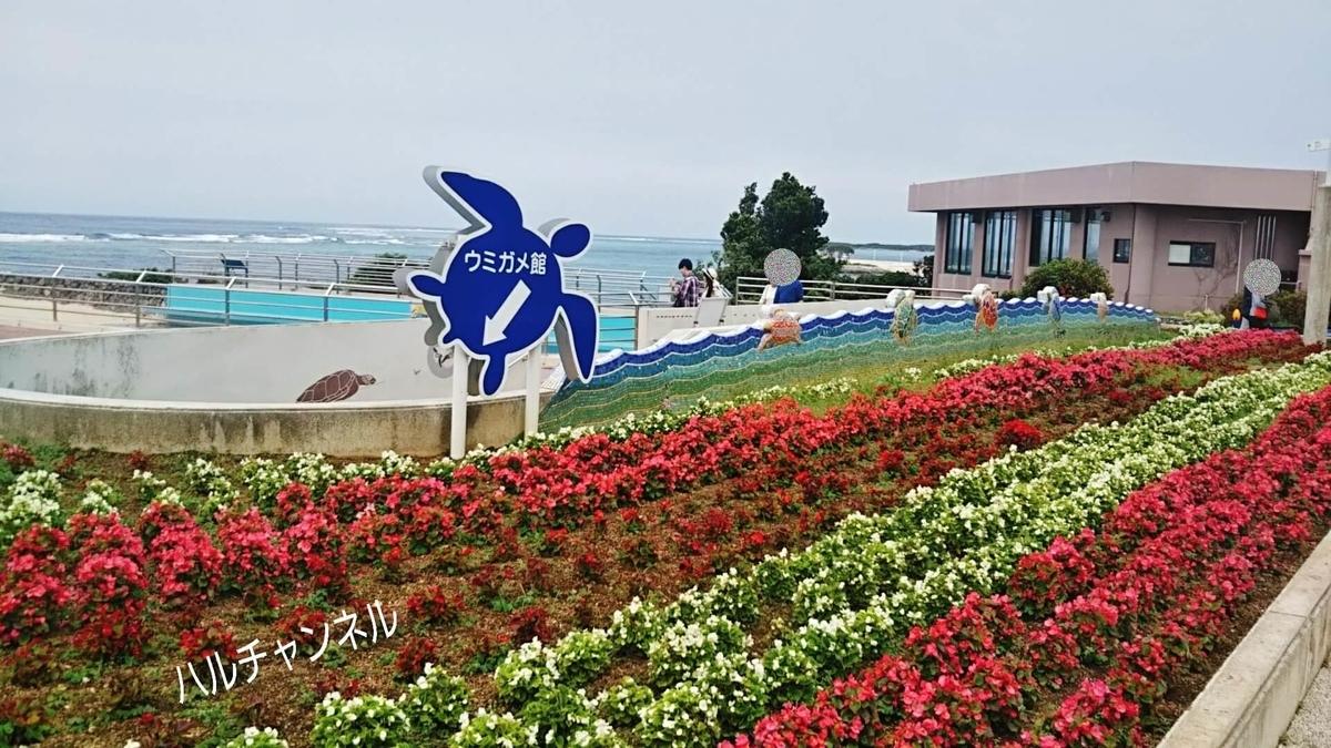 【沖縄】美ら海水族館「カメさん館こっちだよ」