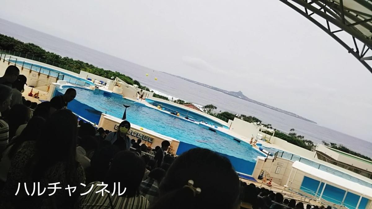 【沖縄】美ら海水族館「オキチャン(イルカ)ショー」