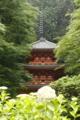 京都新聞写真コンテスト 雨の岩船寺