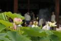 京都新聞写真コンテスト 三室戸寺本殿前の蓮