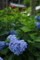 京都新聞写真コンテスト 三室戸寺のハート型紫陽花と山門