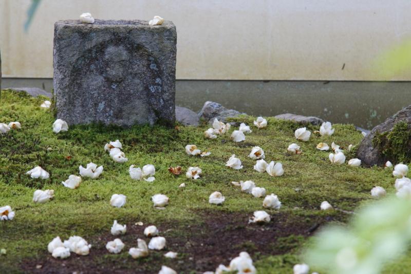 京都新聞写真コンテスト 東林院 沙羅の落花