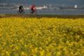 京都新聞写真コンテスト なぎさ公園の菜の花