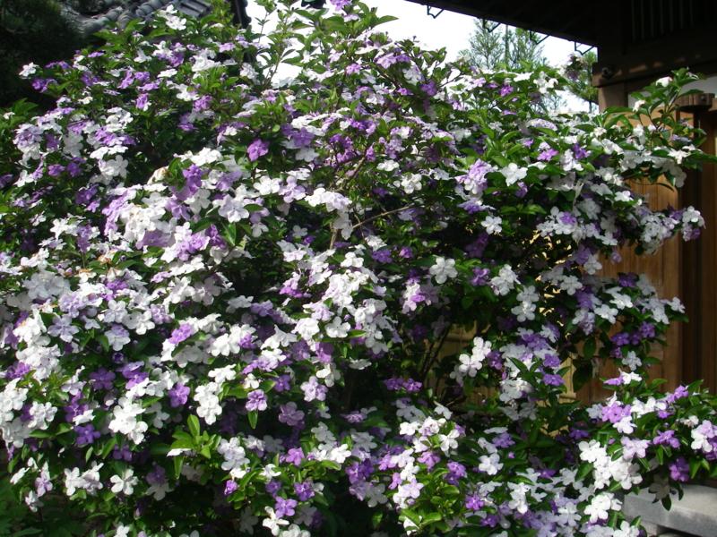 f:id:igarashi-shika-staff:20140519154524j:image:w360