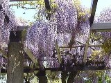 f:id:igarashi-shika-staff:20150511213541j:image