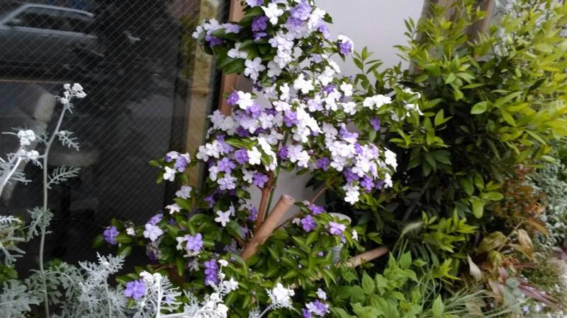 f:id:igarashi-shika-staff:20150513010059j:image