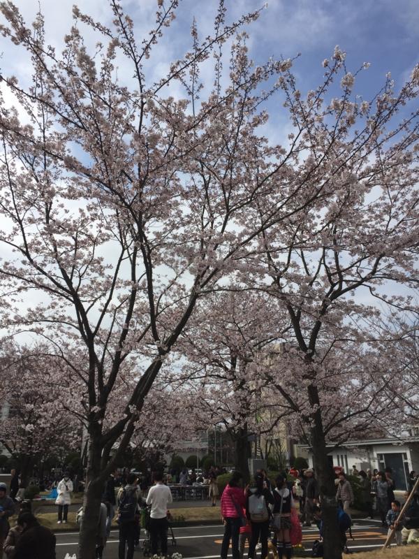 f:id:igarashi-shika-staff:20160402142003j:image