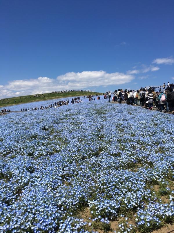 f:id:igarashi-shika-staff:20170423123846j:image:w360