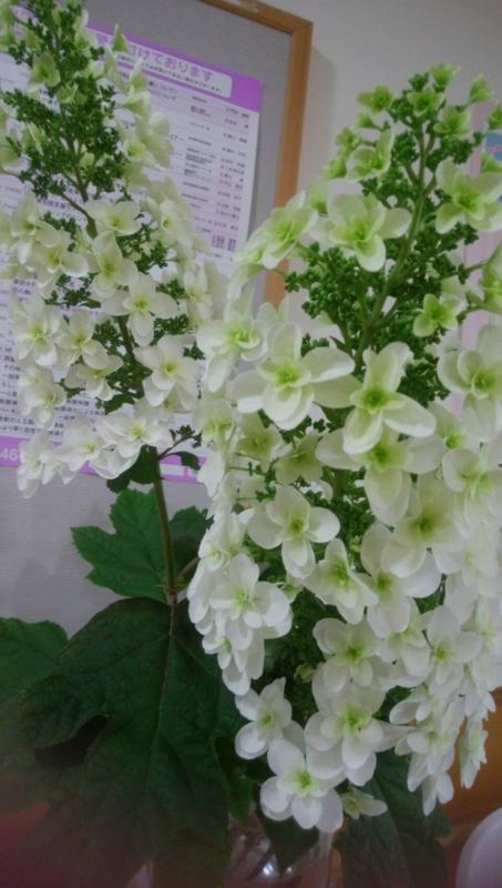 f:id:igarashi-shika-staff:20170602152215j:image:w360