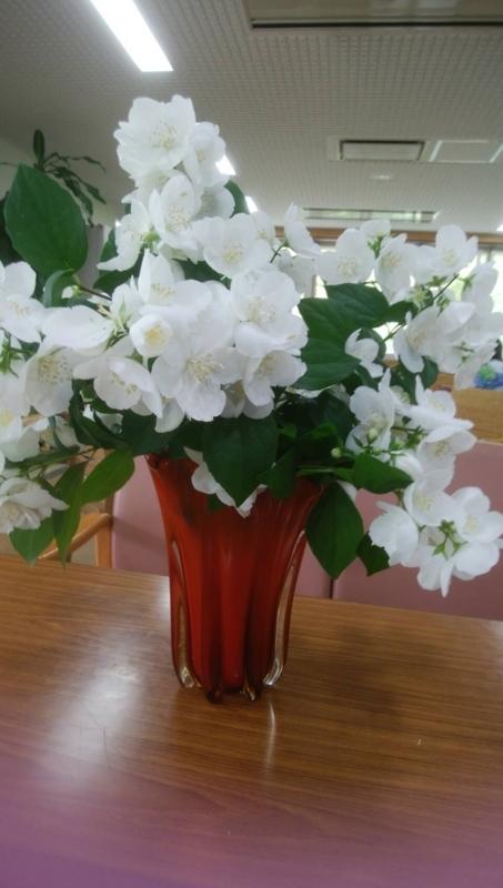 f:id:igarashi-shika-staff:20170602152220j:image:w360