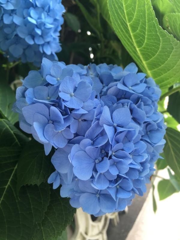 f:id:igarashi-shika-staff:20170611122409j:image
