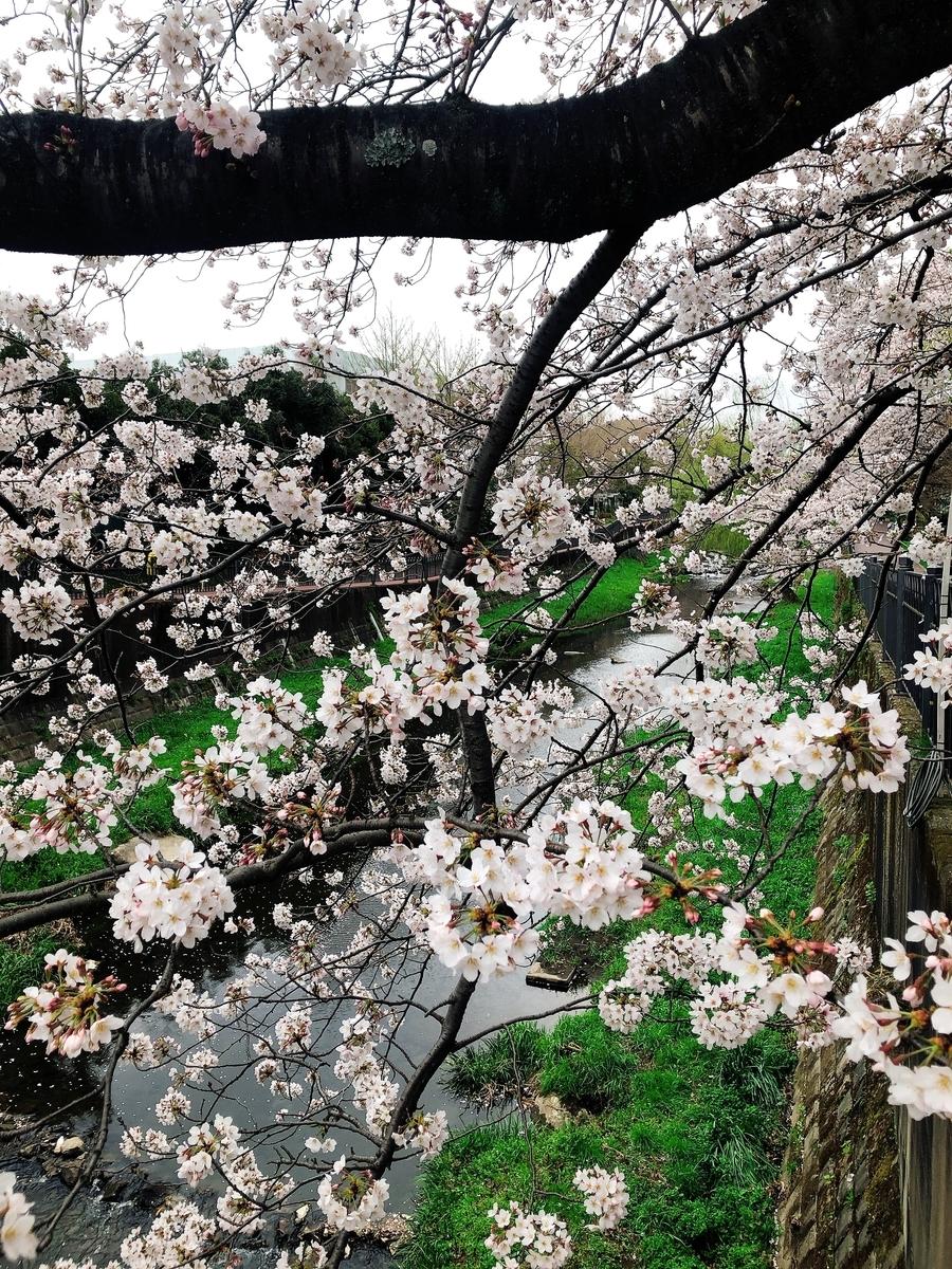 f:id:igarashi-shika-staff:20210326160532j:plain