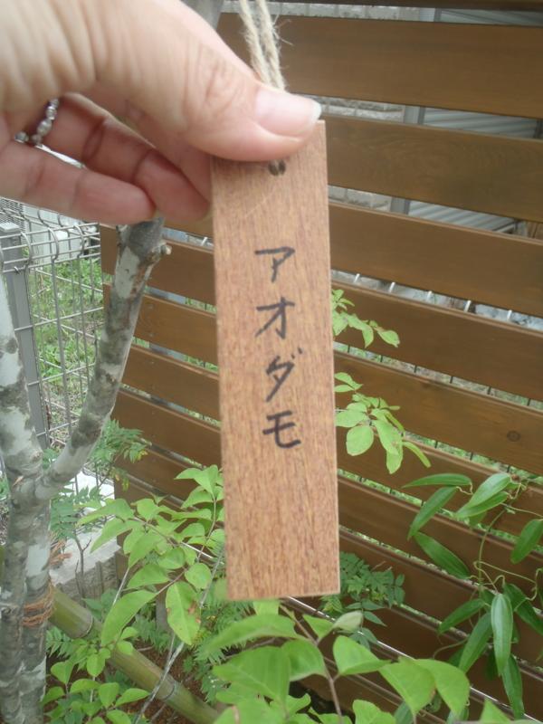 f:id:igarashi-shika:20130618104638j:image:w360