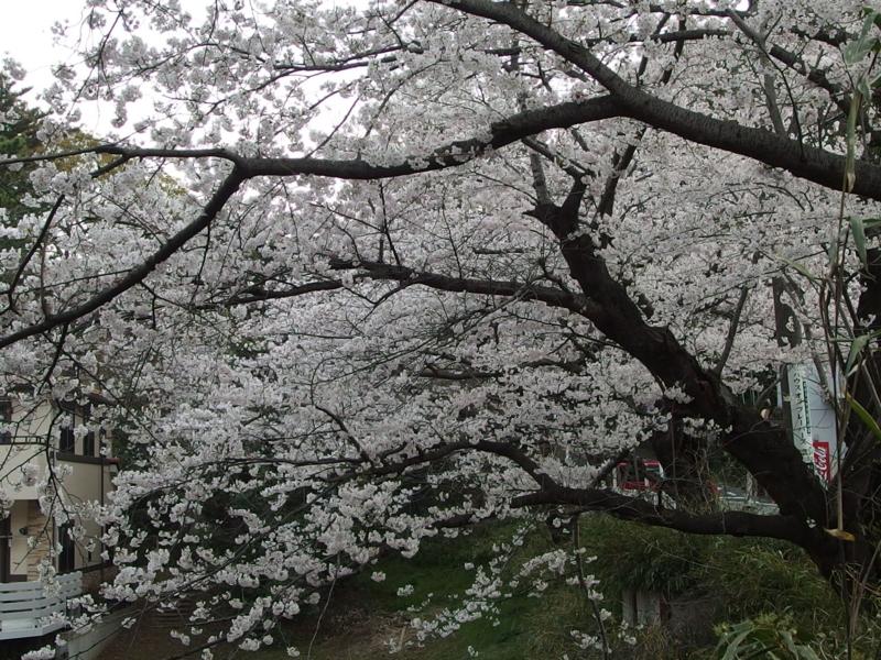 f:id:igarashi-shika:20150402061547j:image:w360