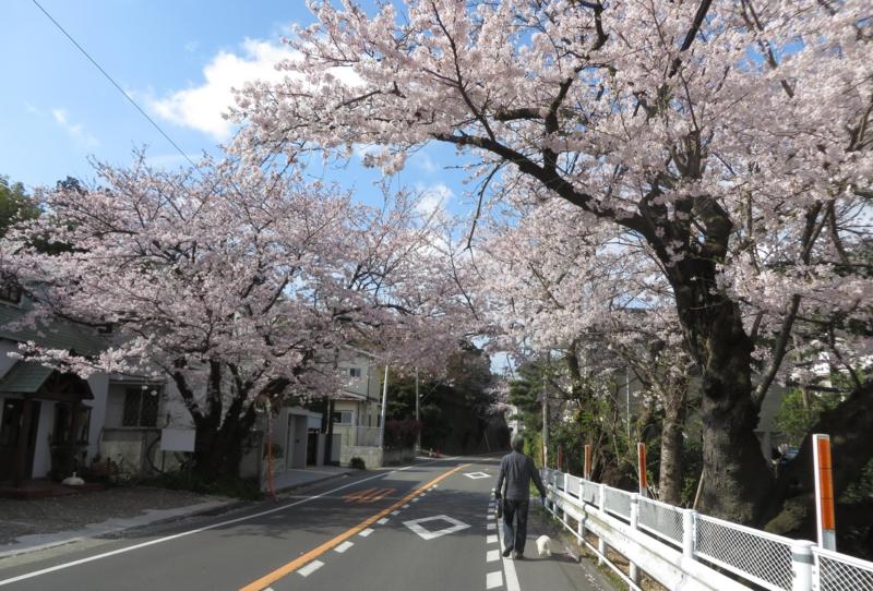 f:id:igarashi-shika:20150402083647j:image:w360