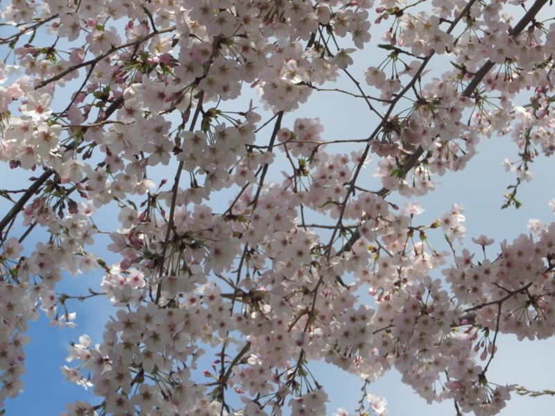 f:id:igarashi-shika:20150402083822j:image:w360