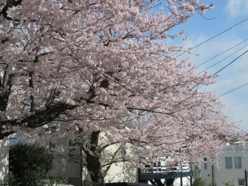 f:id:igarashi-shika:20150402085432j:image:w360