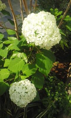 f:id:igarashi-shika:20150615200250j:image:w360