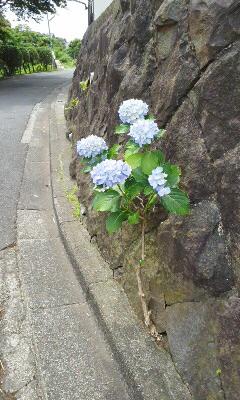 f:id:igarashi-shika:20150615200308j:image:w360