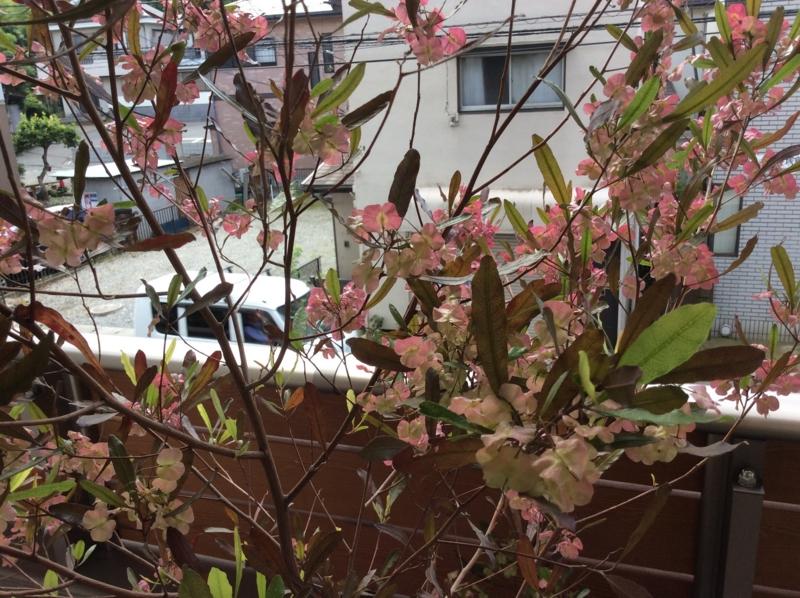 f:id:igarashi-shika:20150628145808j:image:w360