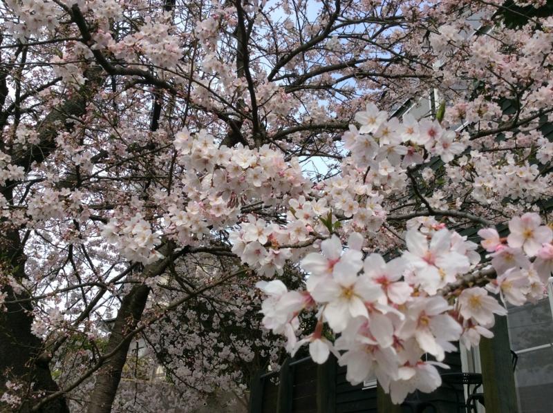 f:id:igarashi-shika:20160401171245j:image:w360