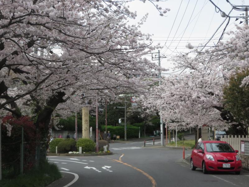 f:id:igarashi-shika:20160406163543j:image:w360