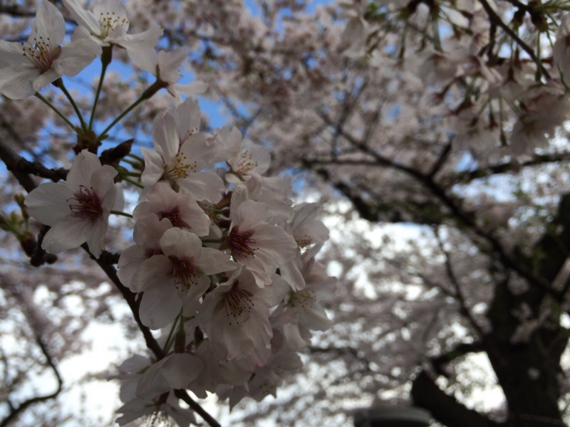 f:id:igarashi-shika:20160406221002j:image:w360