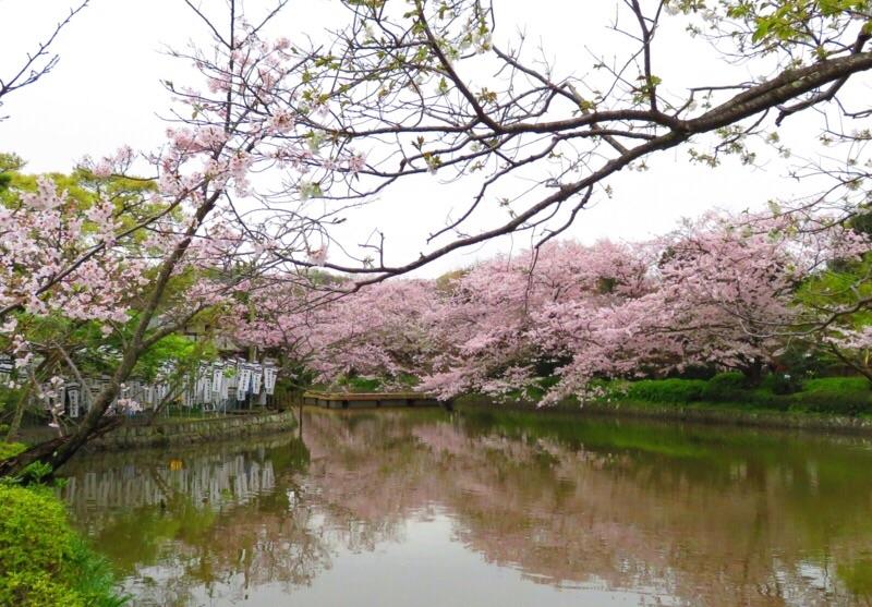 f:id:igarashi-shika:20160407083512j:image:w360