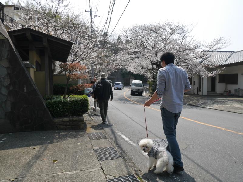 f:id:igarashi-shika:20180327104604j:image:w360