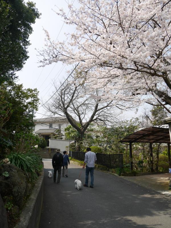 f:id:igarashi-shika:20180327115940j:image:w360