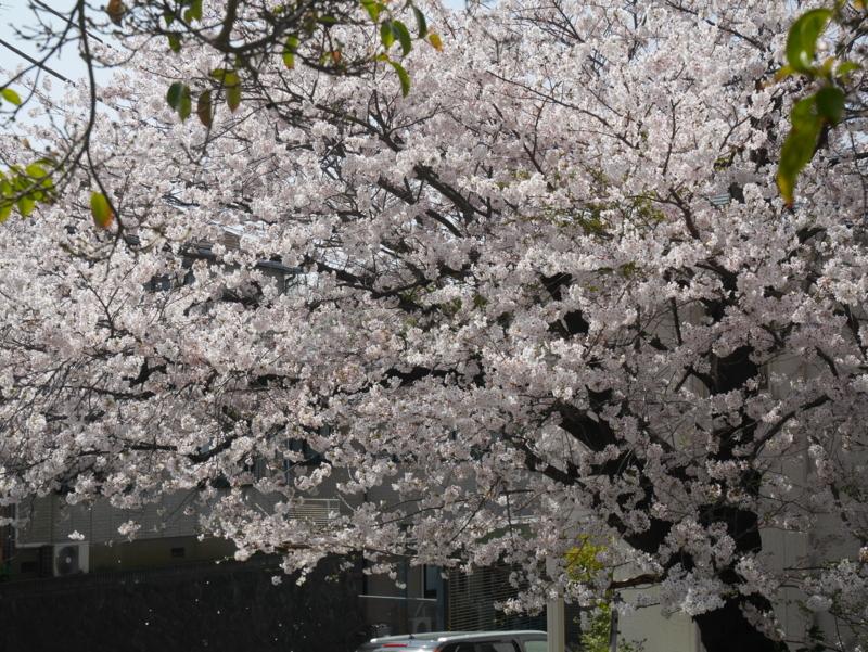 f:id:igarashi-shika:20180329130504j:image:w360