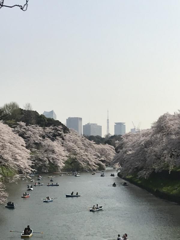 f:id:igarashi-shika:20180401220149j:image:w360