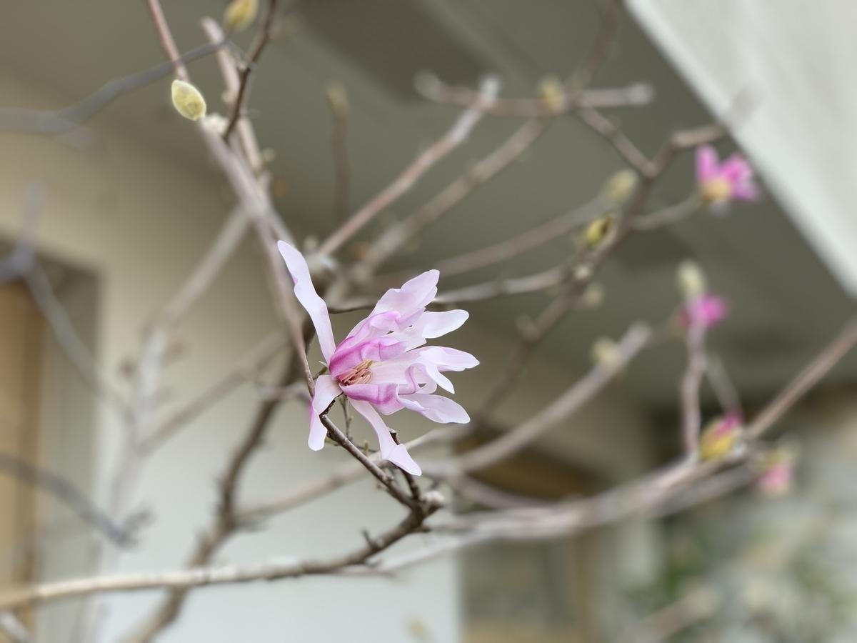 f:id:igarashi-shika:20190312153357j:plain