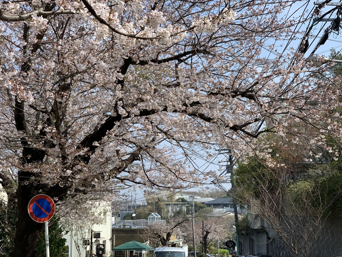 f:id:igarashi-shika:20190401170248j:plain