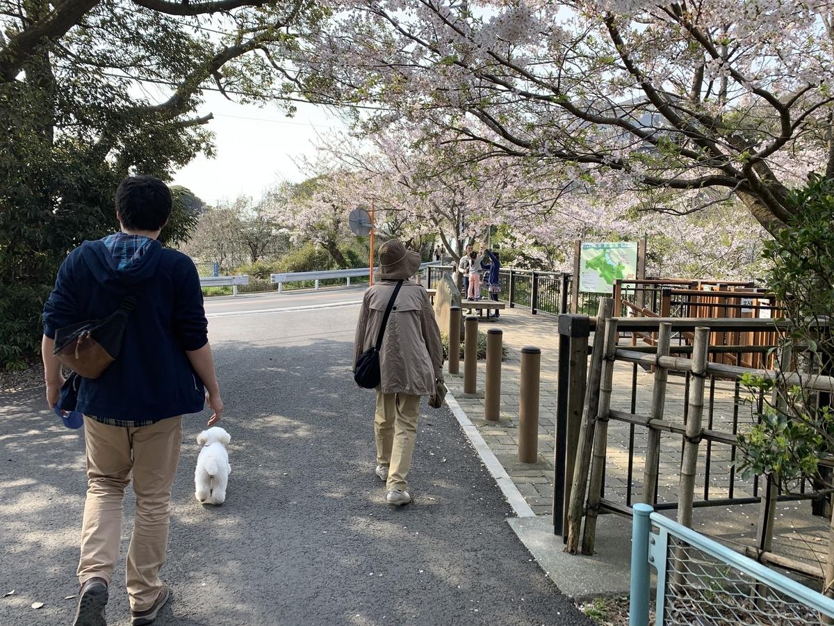 f:id:igarashi-shika:20190408180834j:plain
