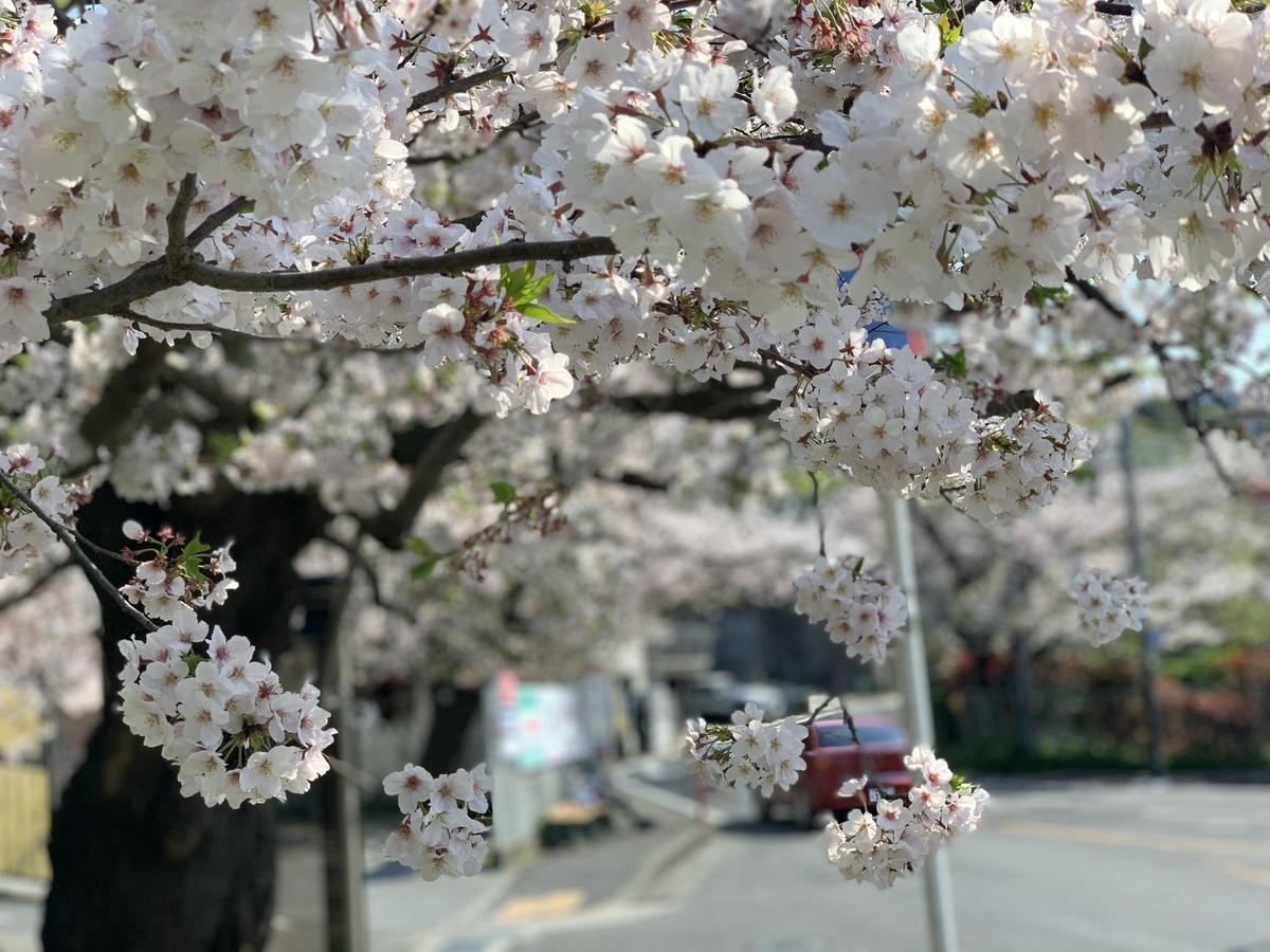 f:id:igarashi-shika:20200404142012j:plain