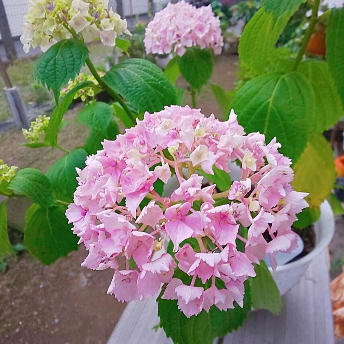 f:id:igarashi-shika:20200605133649j:plain