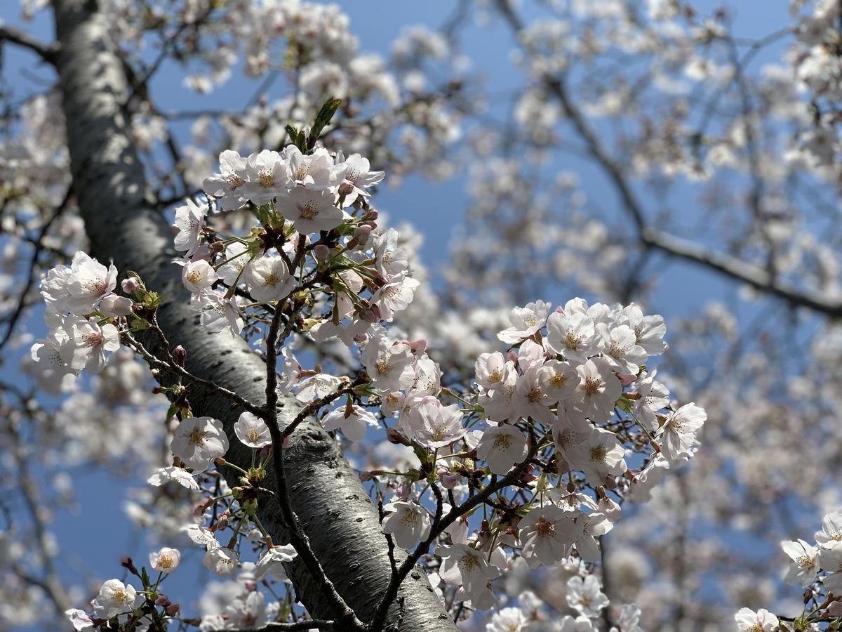 f:id:igarashi-shika:20210327114747j:plain