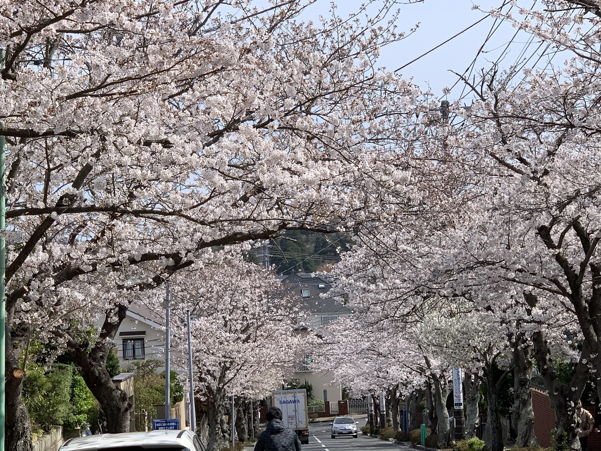 f:id:igarashi-shika:20210327190409j:plain