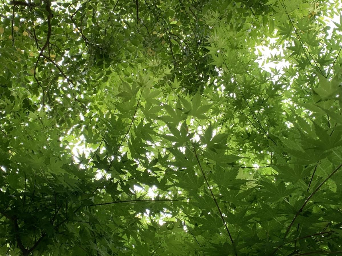 f:id:igarashi-shika:20210502173320j:plain