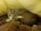 猫まとめ見てたらぐれさまいぢりたくなって。布団の中に潜ってた。ぬ