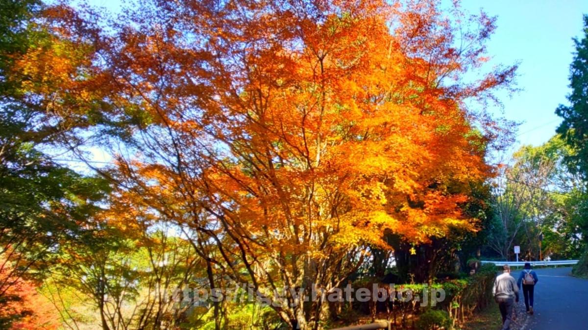 油山市民の森 紅葉 iggy2019