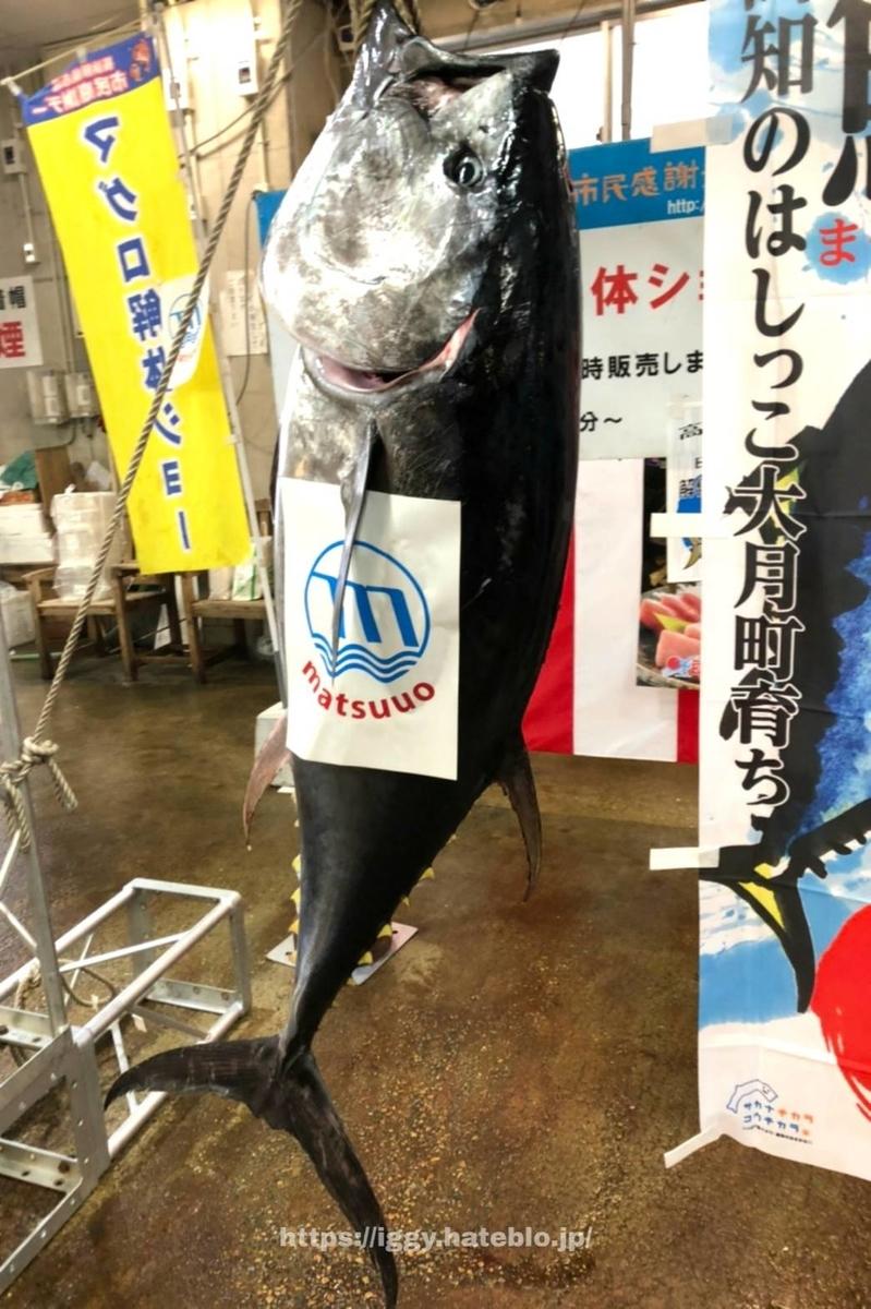 長浜鮮魚市場 本マグロ解体ショー「日の出マグロ」 iggy2019